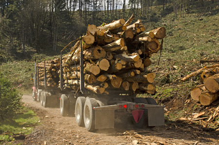 destined: a log truck leaves the site landing with a load of conifer logs destined for the mill in southern Oregon