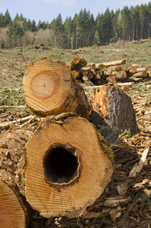 A load of logs await the loader or forestry machine loads a log truck at the site landing photo