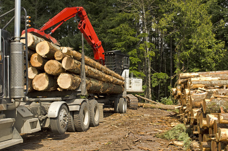 mule train: A log loader or forestry machine loads a log truck at the site landing in southern Oregon