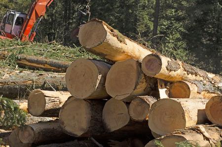 ダグラスファー ログ delimbed されていると林業プロセッサによって長さにカットした後のログのサイトでの小さなスタック