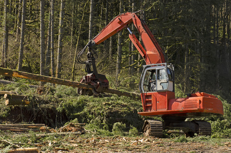 wood cutter: A logging harversting or processing head is being used to delimb and cut to length logs before stacking Stock Photo