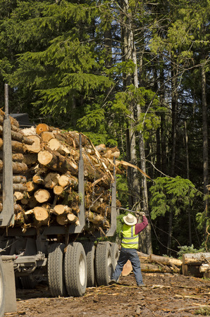 logging truck: A log loader or forestry machine loads a log truck at the site landing with the driver securing the load in southern Oregon