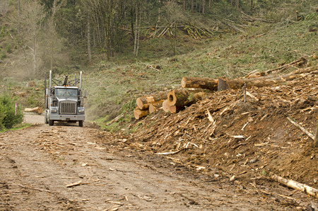 destined: a log truck arrives at the the site landing with for a load of conifer logs destined for the mill in southern Oregon Stock Photo