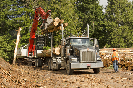 hauling: A log loader or forestry machine loads a log truck at the site landing in southern Oregon