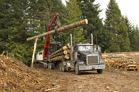 A log loader or forestry machine loads a log truck at the site landing in southern Oregon photo