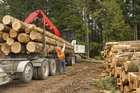 mule train: A log loader or forestry machine loads a log truck at the site landing with the driver securing the load in southern Oregon