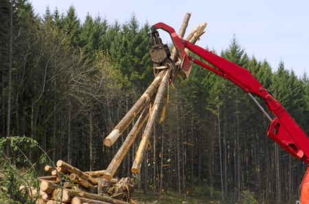 Eine Log-Loader oder Forstmaschine bewegt frisch geschnittenen Stämme zum Laden auf einem Protokoll-LKW auf der Baustelle Protokollierung Landung in Süd-Oregon Standard-Bild - 31077752
