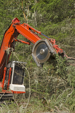 machinery: Track mounted forestry feller buncher cutting down down conifer fir trees logs at a logging unit site in Oregon