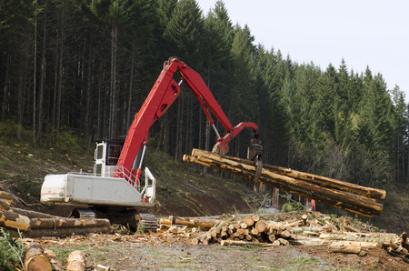logging truck: A log loader or forestry machine moves fresh cut logs for loading on a log truck at the site logging landing in southern Oregon