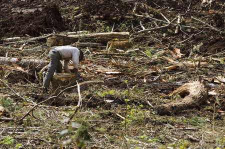 A logger choker setter selects and cables logs to the skyline of a yoder or loader yarder for retrieval to the landing