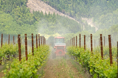 fungicide: tractor using a air dust machine sprayer with a chemical insecticide, sulfur, or fungicide in the vineyard of wine grape vines in Oregon Stock Photo