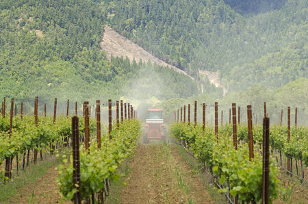 tractor using a air dust machine sprayer with a chemical insecticide, sulfur, or fungicide in the vineyard of wine grape vines in Oregon photo