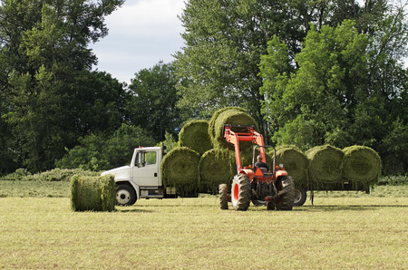 flatbed truck: Tractor picking up large round bales of high value alfalfa grass feed  and putting on a truck to ship to the barn from a summer field in Oregon Stock Photo