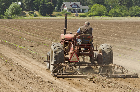 Farmer using a special row tractor and weeding harrow to work rows of newly planted vegetables Stok Fotoğraf - 32737524