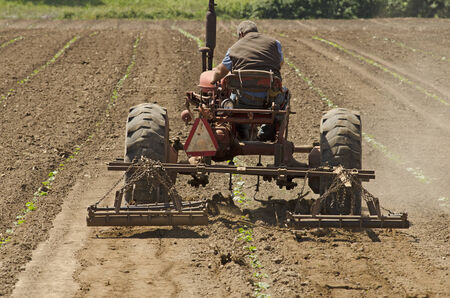 Farmer using a special row tractor and weeding harrow to work rows of newly planted vegetables Stok Fotoğraf - 32737525