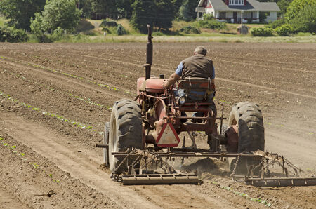 Farmer using a special row tractor and weeding harrow to work rows of newly planted vegetables