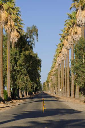 palm lined: Palm trees line Kearny Boulevard near Fresno California in central California Stock Photo
