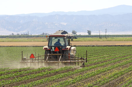 Special row crop tractor weeds and harrows a field of row vegetable crop in Northern California Stok Fotoğraf