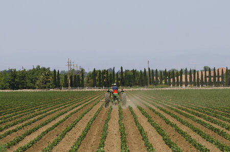 central california: A tractor with a special tank sprays fertilizer on young row plants in central California