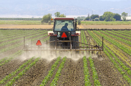 Special row crop tractor weeds and harrows a field of row vegetable crop in Northern California Stok Fotoğraf - 33586074