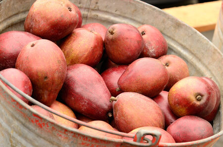 anjou: Peras Anjou Roja en un mercado de agricultores de la zona Park Blocks del centro de Portland Oregon