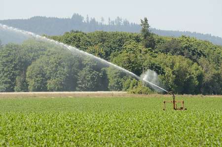 wetting: A large agriculture spinkler wetting a newly planted corn field in the Willamette Valley in Oregon