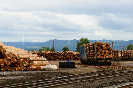 logging railroads: A large log deck at an mill on the Oregon Coast near Astroia Stock Photo