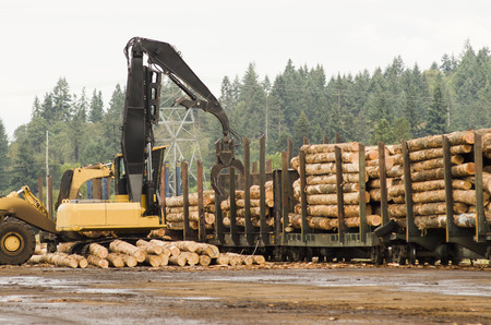 Fir logs being loaded onto rairoad rail cars for transport to the mill in Oregon Stock Photo