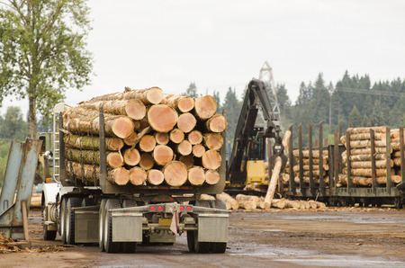 logging railroads: Fir logs being loaded onto rairoad rail cars for transport to the mill in Oregon Stock Photo