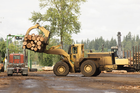 lumber mill: Large rubber tire log loader unloads a log truck at a lumber mill site Stock Photo