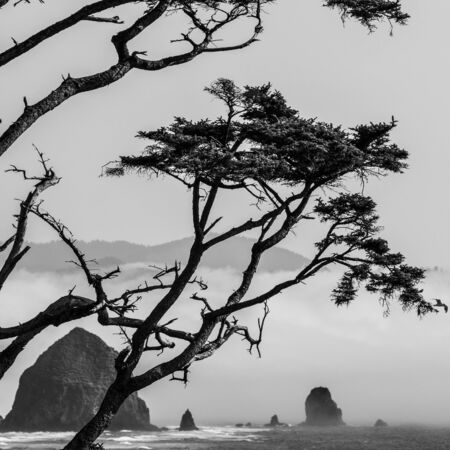 sitka: Haystack Rock at Cannon Beach Oregon with coastal fog rolling in and sitka spruce tree Stock Photo