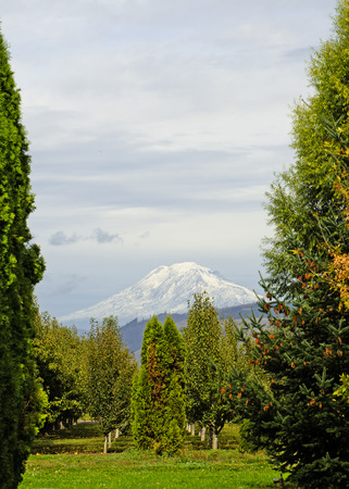 mt  hood: Mt Hood sits over an orchard in the farming area of Hood River Oregon Stock Photo