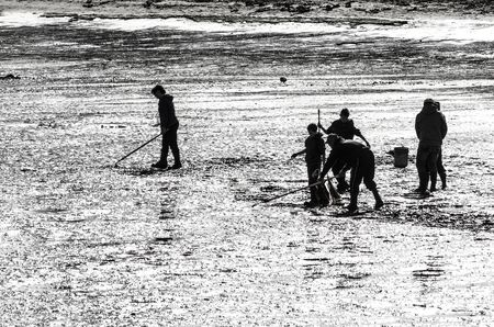 Family digging the mud and sand of a Pacfic Ocean saltwater marsh bay in Oregon for clams