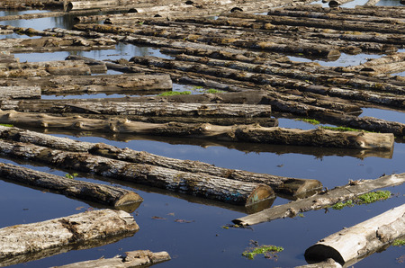 sawmill: Logs sit in a sawmill pond awaiting processing in Oregon Stock Photo