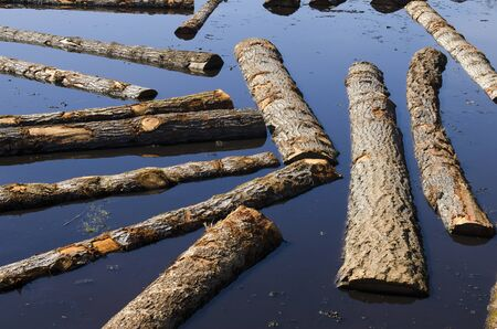awaiting: Logs sit in a sawmill pond awaiting processing in Oregon Stock Photo