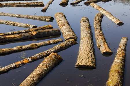 log deck: Logs sit in a sawmill pond awaiting processing in Oregon Stock Photo