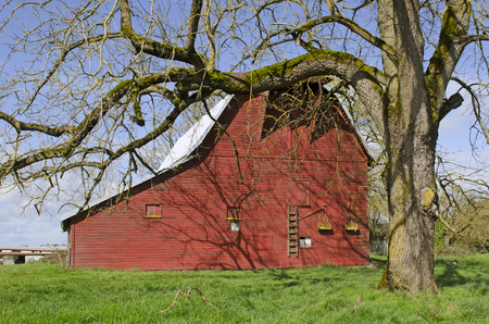 old red barn: A old red barn sits on a farm in the Willamette valley in Oregon