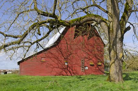 Eine alte rote Scheune sitzt auf einem Bauernhof in der Willamette Valley in Oregon Standard-Bild - 43922575