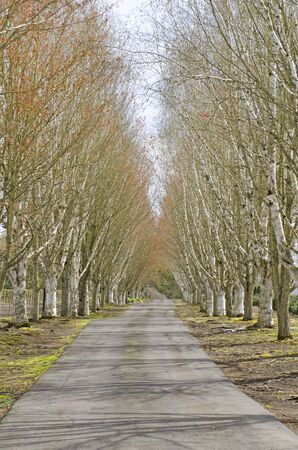 Tree lined country driveway leads to a farm in Oregon