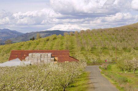 Eine Scheune sitzt in der idealic Apfel Hood River Oregon Obstanbaufläche Standard-Bild - 44982597