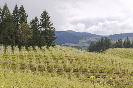 Fruit orchards in Hood River Oregon during early spring
