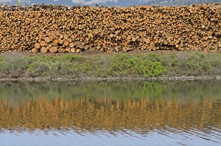 stack of conifer fir logs sit next to a log pond at a lumber mill in the Columbia River Gorge