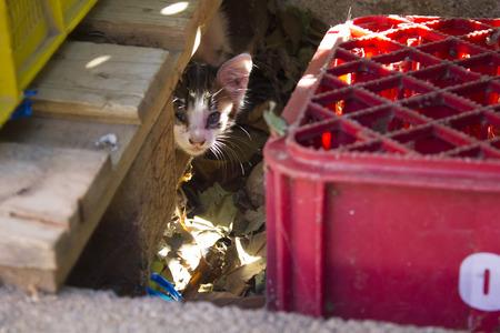 Street kitten hidden in a wooden pallet