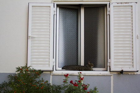 Cat lying in a white window with red flowers