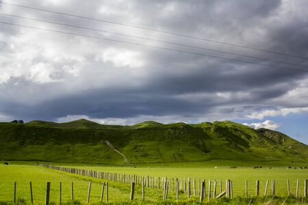 Stunning New Zealand landscape with sheep and cows grazing on vibrant green meadows