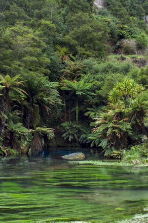The Blue Spring located at Te Waihou Walkway, Hamilton, New Zealand Banco de Imagens