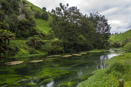 Crystal clear water in New Zealands Blue Spring, Waihou River and beautiful landscape surrounding. Te Waihou river water is the main source of bottled drinking water in New Zealand