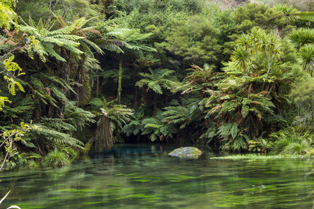 Blue Spring landscape, Te Waihou Walkway, New Zealand
