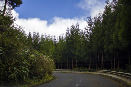 Curve in Asphalt road through the forest