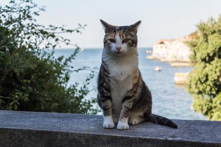 Portrait of Stray Cat Stok Fotoğraf
